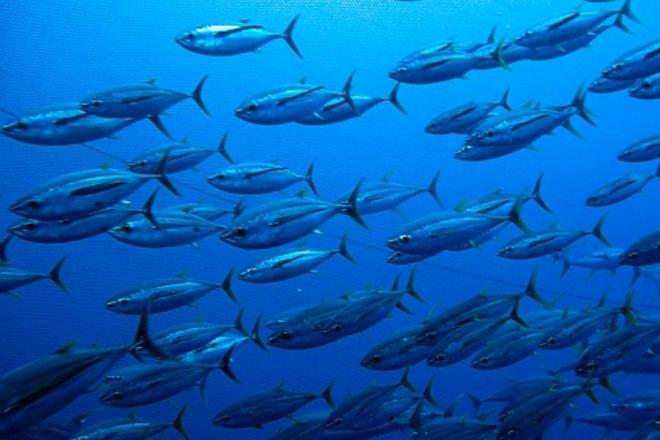 qld fisheries reform stocks