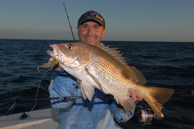weipa fishing zerek