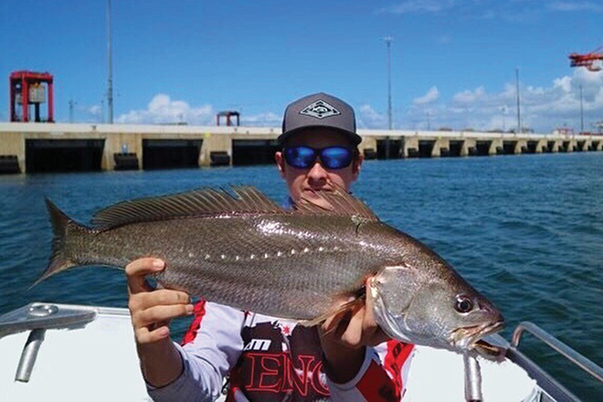 jewfish brissie river