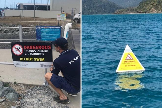cid harbour do not swim shark attack
