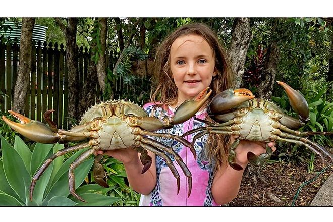 prawns pushed mud crabs