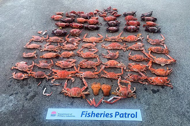 nsw dpi crab poachers