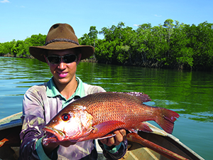 gulf mangrove jack