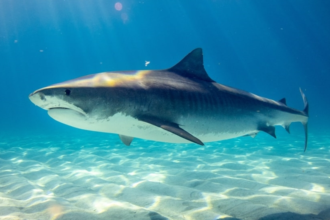 shark control program queensland shark control measures