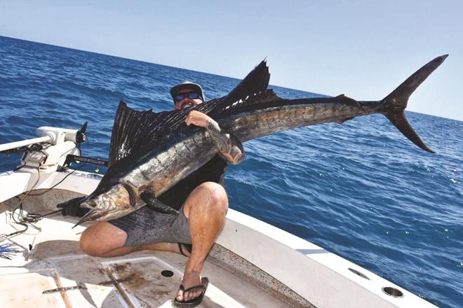 cape york sailfish