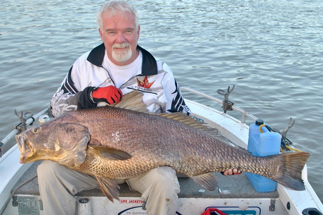 A cm black jewfish that was caught and released.