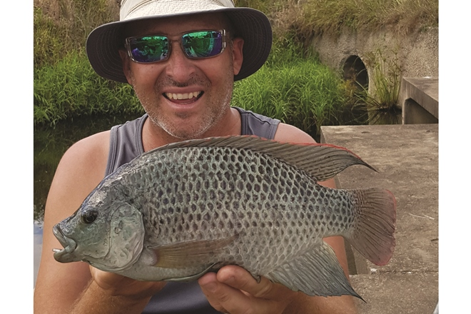 tilapia fishing brisbane