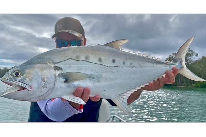 queenfish noosa river