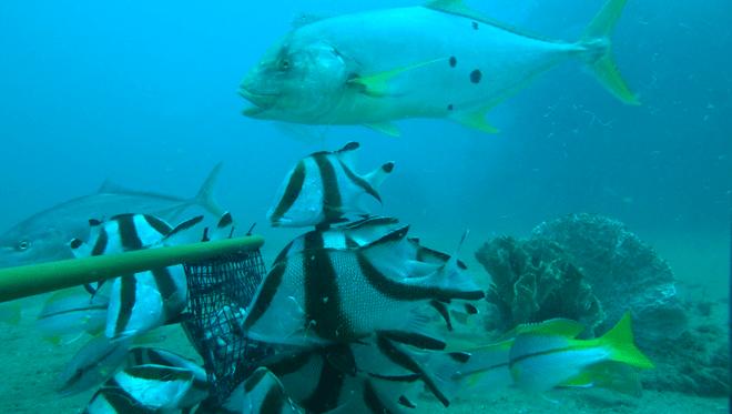 Fish hven