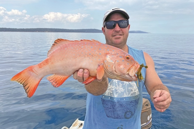 Crazy coral trout in Hervey Bay